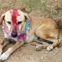 В Индии годовалого малыша женили на собаке, чтобы отогнать духов