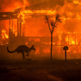 Лесные пожары полностью уничтожили вид австралийских животных