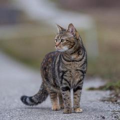 Кот устроил аварию в российском городе и скрылся