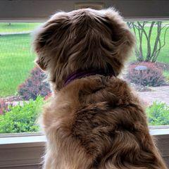 Собака каждый день смотрела в окно – тогда ее хозяйка сделала удивительное открытие