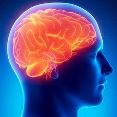 Ученые обнаружили в голове человека неизвестный науке орган