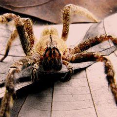 Укус ядовитого паука проделал гигантскую дыру в ноге женщины