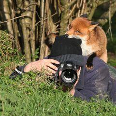 Животные, которые помешали фотографам дикой природы: забавные фото!