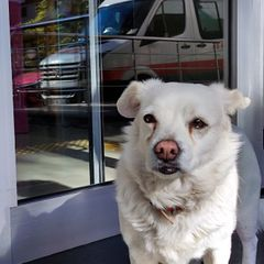 Пёс днями напролёт сидел у больницы. Когда узнали почему, все были поражены!