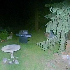 Женщина проверяла камеры во дворе и заметила невероятное. Вы должны это увидеть!