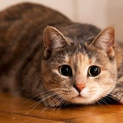 Страшная болезнь, которая развивается у человека из-за кошки