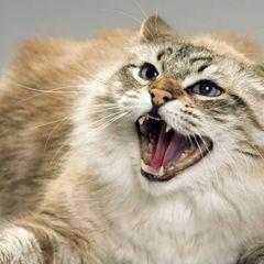 Россиянка умерла после укуса домашней кошки
