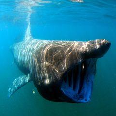 Мужчина столкнулся лицом к лицу со смертельно опасной акулой, и вот чем все закончилось!