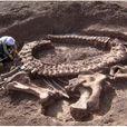 Палеонтологи разбежались в ужасе, когда увидели это: вот что раскопали в Китае