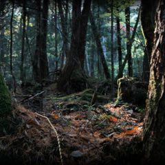 «Жуткая природная аномалия» в лесу напугала людей