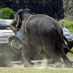 Бешеный слон набросился на толпу людей: слабонервным не смотреть