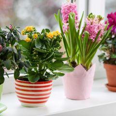 Как ухаживать за растениями осенью: советы профессионала