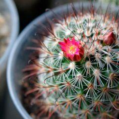 6 неприхотливых и очень красивых растений на ваш подоконник