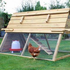 Больше нельзя разводить куриц на даче: почему