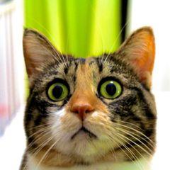 Вы не поверите какой овощ вселяет в кошек страх