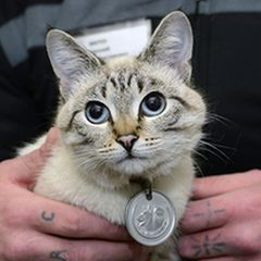 Как кот стал наркокурьером: шокирует
