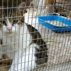 «Нереально боялся собак»: как кот-наркокурьер сбежал перед судом