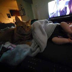 Пара проверила камеры и узнала, что кот делает по ночам